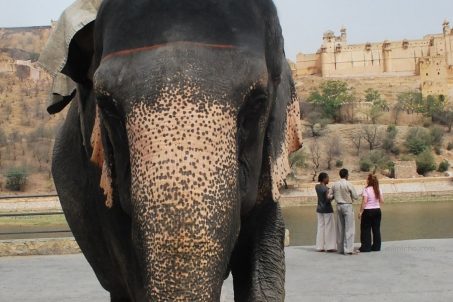 Elephant at Amber Fort, Northern India