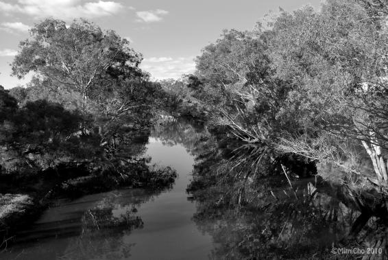 Swan Valley