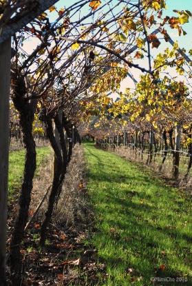 Swan Valley Vineyard